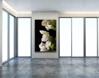Floral Nature Photograph Single Snap Dragon Bloom Against Black Background - Fine Art Canvas - Home Decor Unframed Wall Art Prints