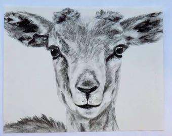 Goat Charcoal Drawing Animal Portrait Print