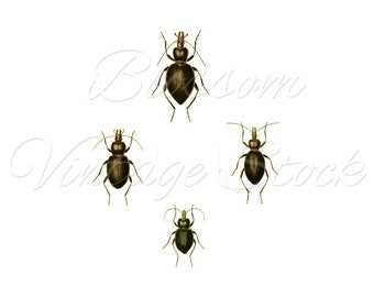Beetles Antique Illustration, Prints, Wall Decor, Digital Image Clipart INSTANT DOWNLOAD 5x7, 8x10, 11x14 Included - 2143