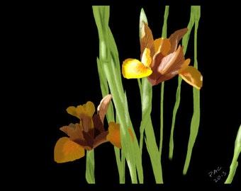 Flower Greeting Card, Blank, Brown Irises Design No A6046