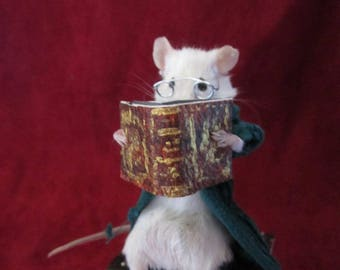 taxidermy rat mouse taxidermy rat oditties curiosity