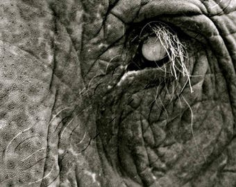 Elephant Close-Up - Instant Download