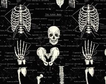 Glow In The Dark Skeleton Bones from Timeless Treasure