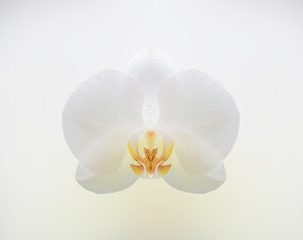 BOTANICAL PRINTS - Instant Digital Download Floral Art - Delicate White Orchid on White Background - A3 Print - Printable Art