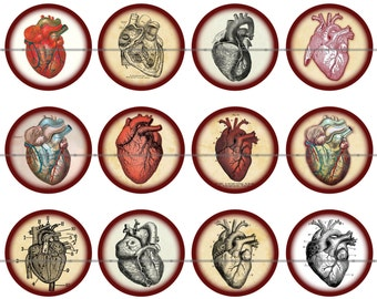 "1"" Inch Anatomical Heart Pins, Flatback Buttons, or Magnets 12 Ct."