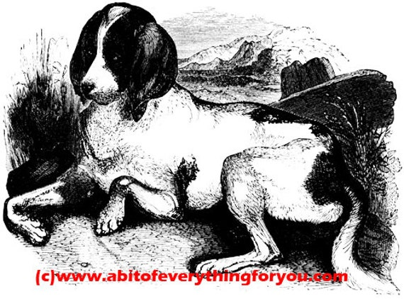 hound dog vintage art clipart png Digital Download printable art Image graphics black and white digital stamp for cards tshirts tags etc