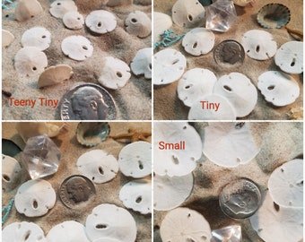 """Real Miniature Sand Dollars Tiny Extra Small 4 sizes under 1"""" Dime Nickel Quarter DIY Jewelry Lockets Scrapbooking Wedding Invite Accents"""