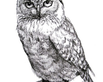 An Owl 11x8.5 pen drawing print from original,  holiday present / birthday present or vavious cards
