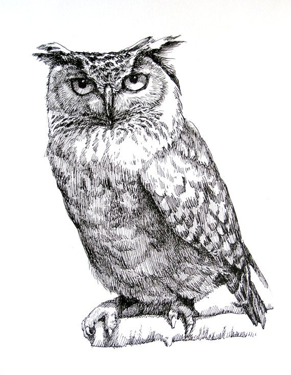 how to draw an owl youtube