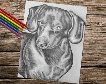 Coloring Pages, adult coloring pages, instant download, printable coloring page, dog coloring, coloring book for adults, dachshund art