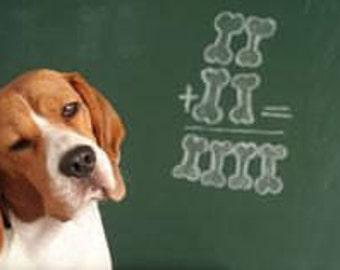 Dog Training, Aromatherapy, pets, dogs, Dog Calming Oils, Dog Calming, Dog Anxiety, Calm Dog, Dog Barking, Dog anxiety, Dog behavior