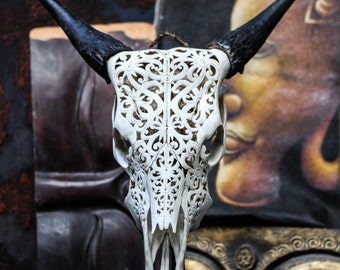 Beautiful Hand Carved Tribal Steer/ Cow Skull with Horns/ Bull/ Longhorns/ Antique Buffalo Taxidermy