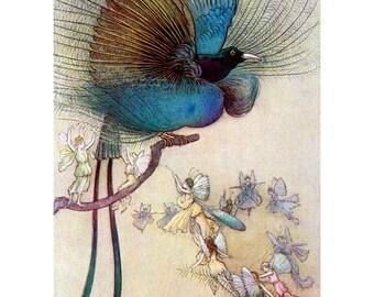 Fairy Fridge Magnet - Bird of Paradise with Fairies - Water Babies Illustration - Warwick Goble