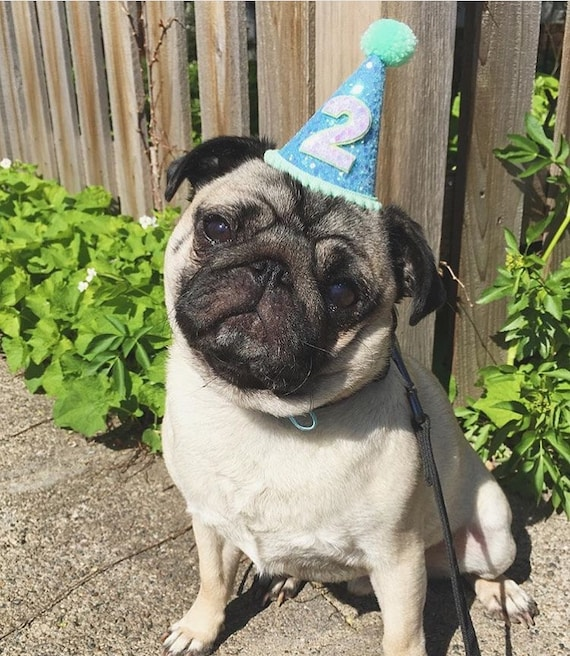 Dog Party Hat || Dog Hat || Animal Hat || Birthday Hat || Pet Birthday || Cat Kitty Dog Puppy Pig Birthday || Dog Collar