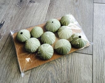 10 Pack Green Sea Urchins For Hanging Air Plants Crafts