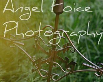 Weathervane Photograph
