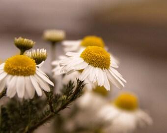 Northern Flower