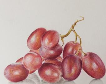 Colored pencil grapes drawing - original art - still life painting - grapes painting
