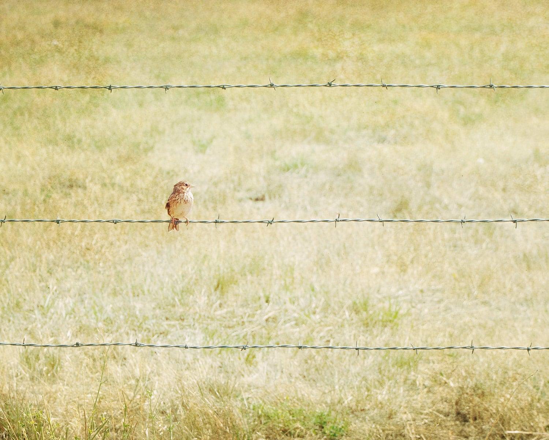 Bird & Barbed Wire - fine art photography