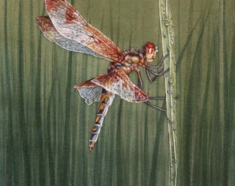 MATTED Print of Calico Pennant Dragonfly from Original Watercolor Painting, Wall Art, Home Decor, Nature, Wildlife Illustration, Kids Room