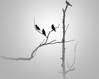 Black and White photography, black birds, minimalist photography, minimalist art, bird photography, photography, minimalism, grey