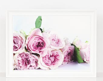 Pink Roses Photography Print