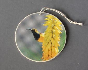Olive-backed Sunbird Photo Ornament