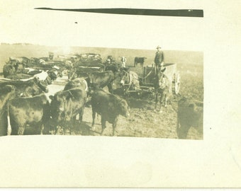 Cows Farm Horse Wagon Antique RPPC Real Photo Postcard Field Midwest Farmer Photograph Black White Photo