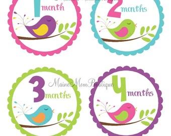 FREE GIFT, Monthly Baby Girl Stickers, Baby Month Stickers, Bodysuit Milestone Stickers, Bird Birds Stickers Gift