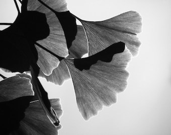 Ginkgo Leaves Black and White Photograph Grey Gingko Nature Home Decor 10x8 Print Gingko (Black and White)...