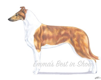 Smooth Collie Dog - Archival Quality Fine Art Print - AKC Best in Show Champion - Breed Standard - Herding Group - Original Art Print