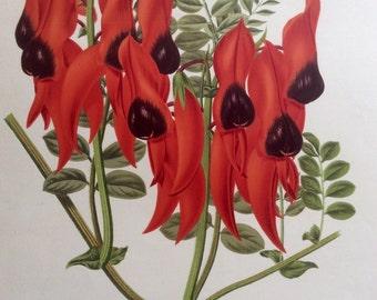 RARE Antique Botanical 1880s Print Victorian Color Chromolithograph Flower Floral Vintage