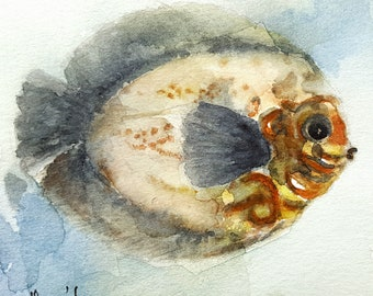 Fish original watercolor painting on paper