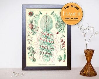 "Vintage illustration from Ernst Haeckel  - framed fine art print, sea creatures,sea life, 8""x10"" ; 11""x14"", FREE SHIPPING - 309"