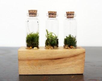 Triple Vial Terrarium Kit