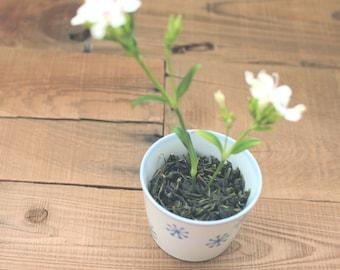 Orchid Pouchong Oolong Tea / Floral Green Tea / Green Tea / Wolf Tea