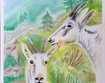 Mountain goats, Glacier Park