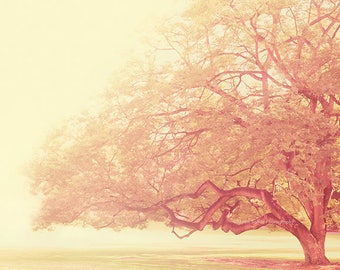 tree photography, that was just a dream, nursery art, girls room, pink buttercream landscape botanical ethereal nature fine art print