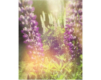 Wildflower Art, Meadow Photography, Lupine Art Print, Country Art, Wildflower Photography, Dreamy Shabby Chic Wall Decor, Sunshine
