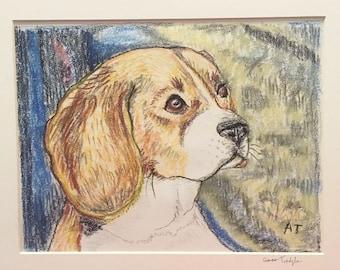 Original Conté Beagle Illustration