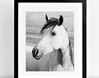 Rustic Country Photograph of White Horse, Black and White Horse Art, Physical Print