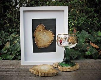 Framed petrified wood slice and petrified wood coasters, stone coasters, rock coaster
