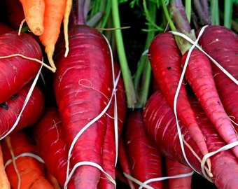 Burgandy Carrots - Fine Art Photograph