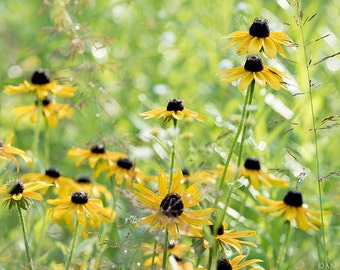 Brown Eyed Susan Flower Print, Wildflowers, Nature, Nature Photography, Home Decor, Yellow Flower Pictures