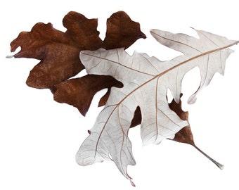 Fall oak leaves photo, oak leaves art, fall leaves decor, nature print, fall still life art, rustic home deocr, log cabin wall art, nature