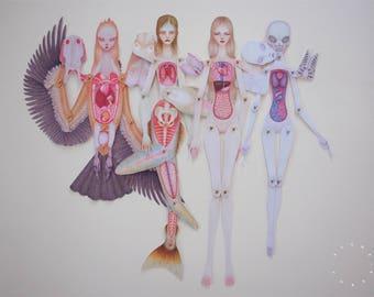 Set of 4 Paper Anatomy Dolls - Human, Mermaid, Alien & Harpy
