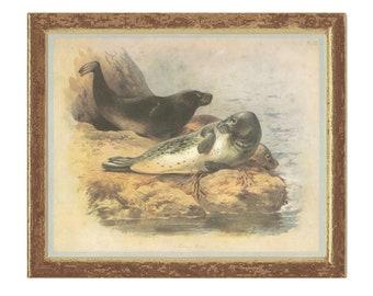 Grey Seal, Vintage Print, Thorburn, 1979/13, Natural History, Woodland, Frameable Art