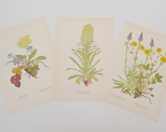 Vintage Botanical Prints: Set of Three