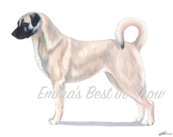 Anatolian Shepherd Dog - Archival Fine Art Print - AKC Best in Show Champion - Breed Standard - Working Group - Original Art Print