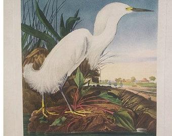 Audubon's Snow Heron or White Egret by American Print Craft Gulid